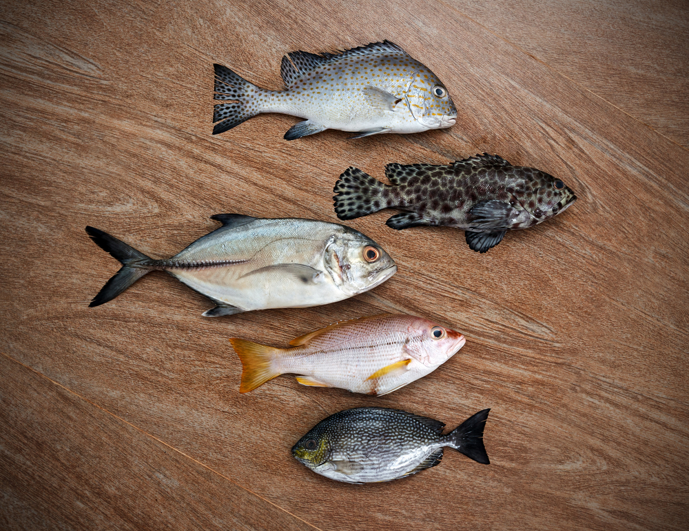 Photo of five types of fish